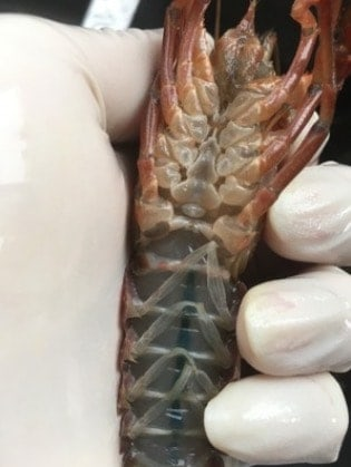 How to Buy and Clean Crayfish Like a Pro step1