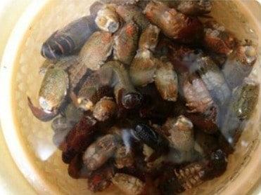 Chinese Crayfish in Brine Recipe Step1