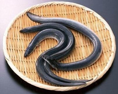 Chinese Stir fry Eels Recipe Step1