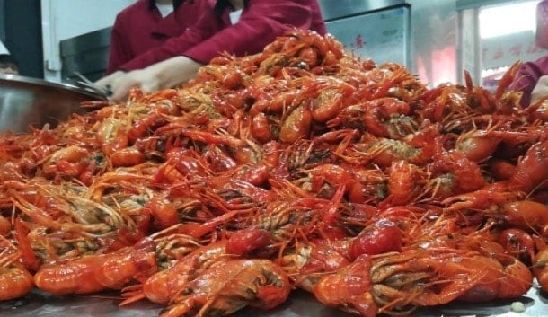Everything You Need to Know about Crayfish in China raise in seafood pool cut tail shell