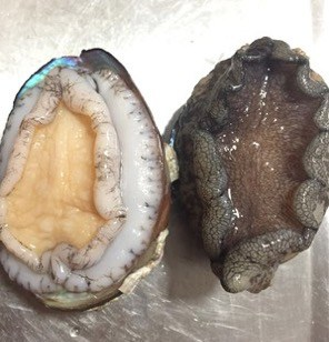 How to Buy and Wash Abalones step3
