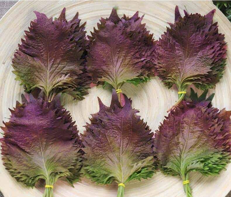 Purple Perilla Taste Reviews