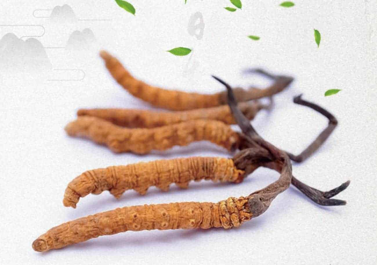Caterpillar Fungus Taste Review and Cooking Tips