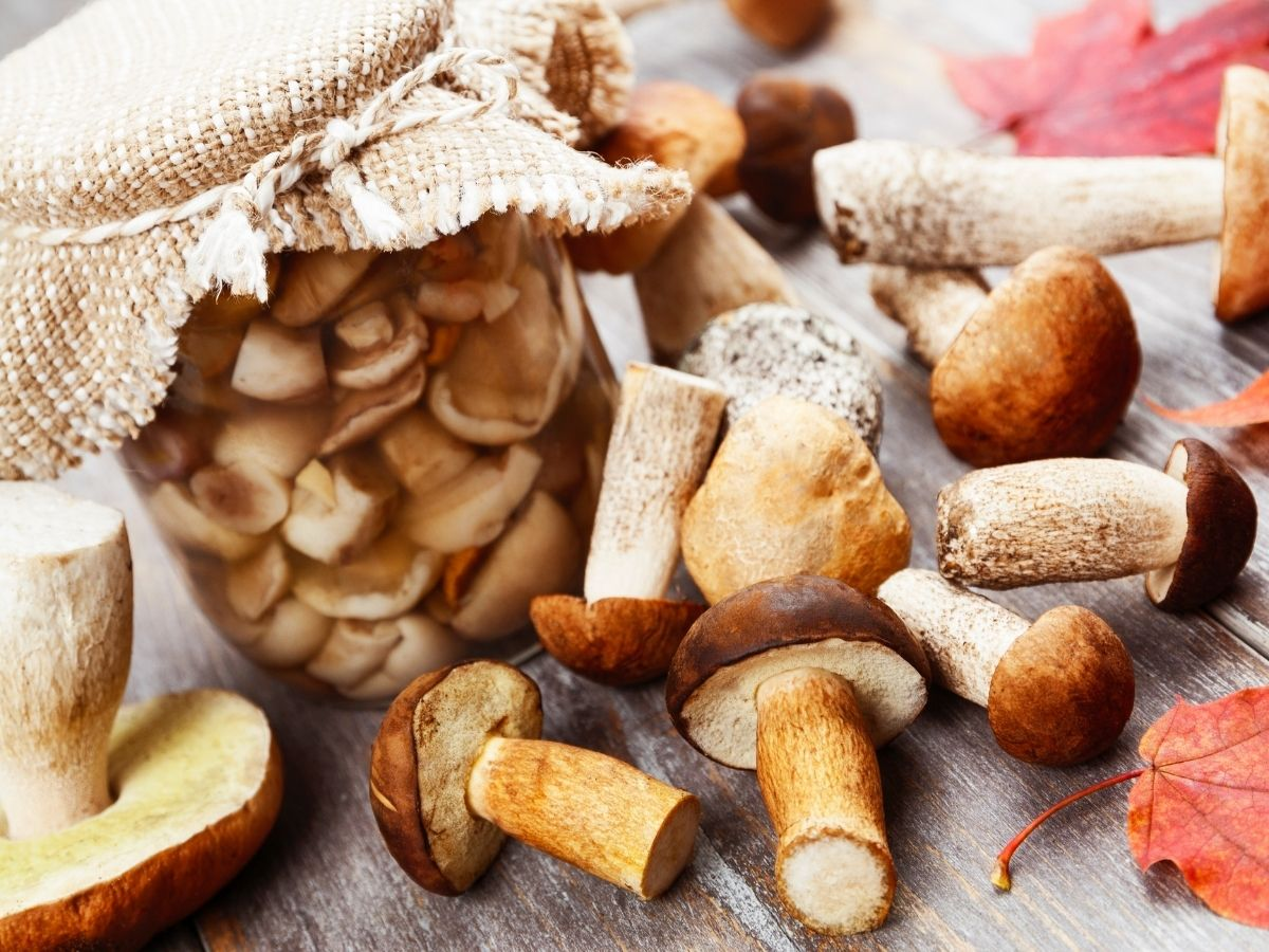 Top 10 Best Canned Mushrooms