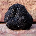 Top 10 Best Canned Truffles Reviews 2021