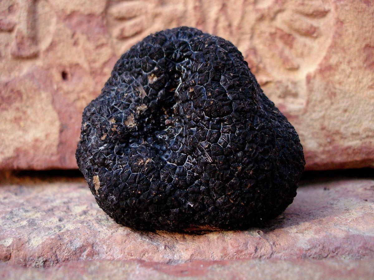 Top 10 Best Canned Truffles