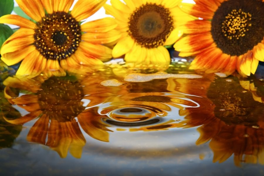 What is Sunflower Cooking Oil